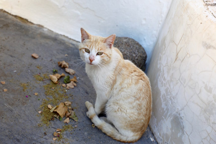 Companhia das Culturas hotel Algarve cat