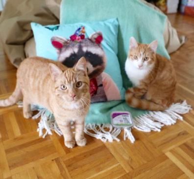 Biologisch kattenvoer van Yarrah getest
